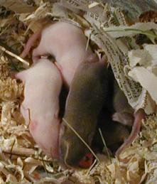 Foto mit Mäusen