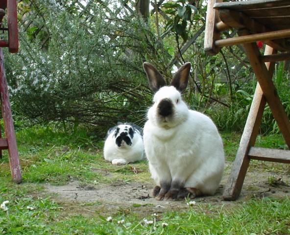 Foto mit 2 Kaninchen