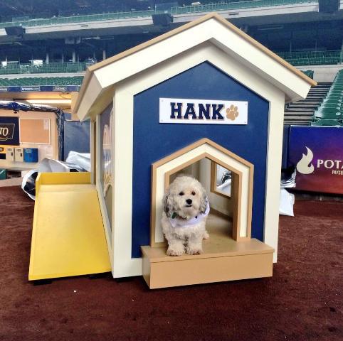 Hund schaut aus seiner Hütte